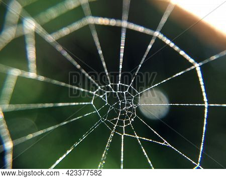 Spider Web Macro Photo. Abstract Background With Arachnid Netting Close-up.