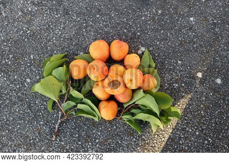 Ripe Apricots And Green Apricot Leaves On A Gray Background.