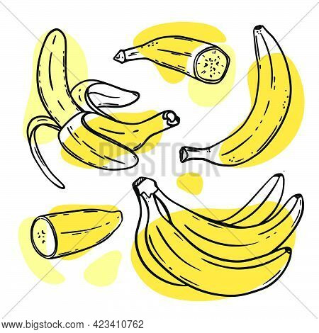 Bananas Ripe Delicious Tropical Fruit Individually Peeled And In A Bunch In Sketch Style For Design