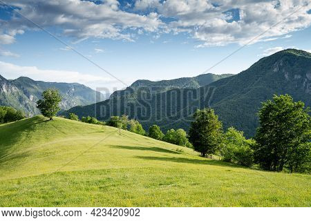 Majestic Beautiful Mountain Landscape Scenery With Lonely Tree On Hill Covered With Green Grass And