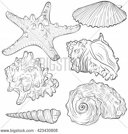 Set With Starfish And Shells Of Different Arbitrary Shapes. Vector Hand Drawn Line Art Illustration