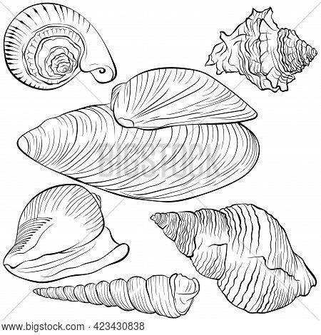 Set With Sea Shells Of Various Spiral Shapes. Vector Hand Drawn Line Art Illustration Isolated On Wh
