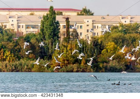Scenic Sunset Townscape With Gulls Above Lake On City Buildings Background.