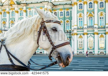 St. Petersburg, Russia - May 10, 2021. A White Horse For Walks In Front Of The Building Of The Main