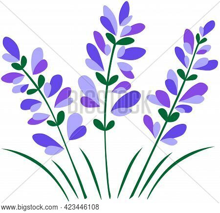 Colored Stylized Lavender. Abstract Lavender Flowers Bouquet