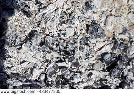 Gray Ash From The Oven Background Texture, Cinder, Grey Ashes From The Wood From The Fireplace