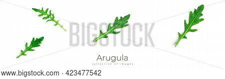 Arugula On White Background. Arugula Leaves Isolated.