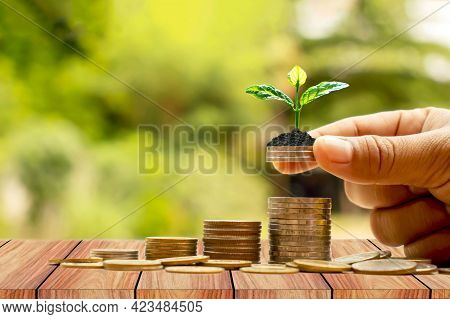 Financial Planning. Investment For Retirement Or Education Concept.