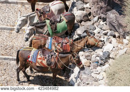 A Group Of Donkeys In Santorini Greece, Waiting To Transport Tourists To The Old Port Of The Extinct