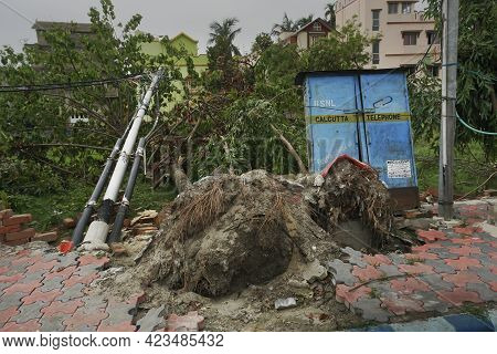 Howrah, West Bengal, India - 31st May 2020 : Super Cyclone Amphan Uprooted Tree. The Force Destroyed