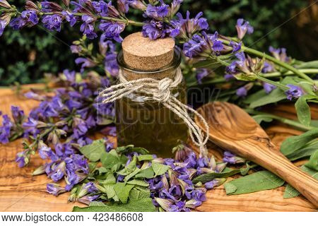 Purple Sage Blossons And Green Leaves On Olive Wood