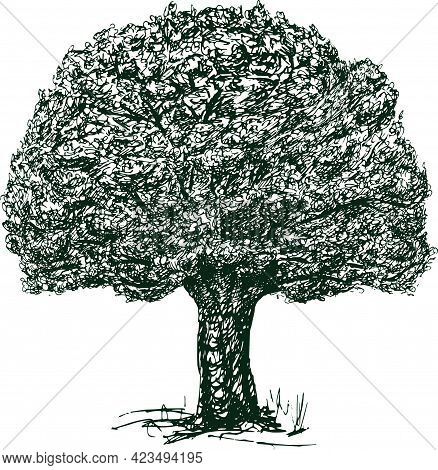 Freehand Drawing Of Abstract Old Oak Tree With Lush Foliage