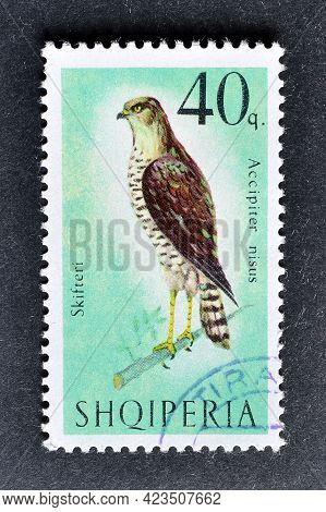 Albania - Circa 1966 : Cancelled Postage Stamp Printed By Albania, That Shows eurasian Sparrow Hawk