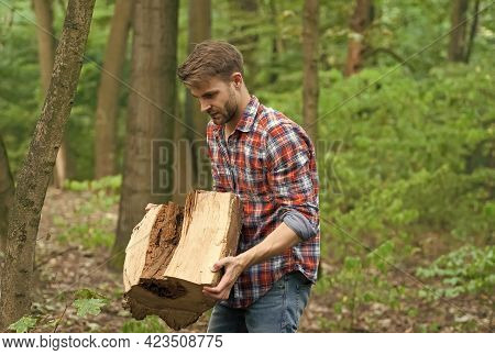 It Is So Heavy. Carry Tree Stump. Chopping And Splitting Firewood. Lumber Worker In Wood. Spend Picn