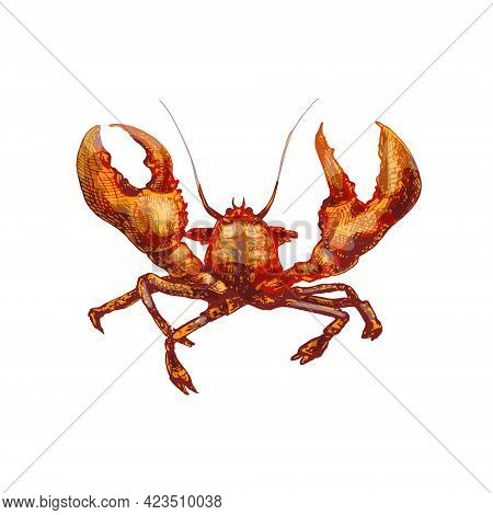 Lobster. Vintage Hatching Vector Color Illustration. Isolated On White Background.