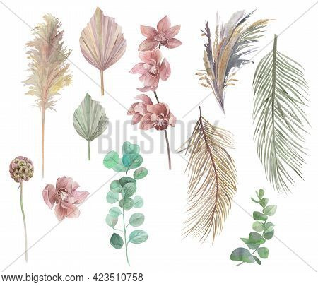 Watercolor Tropical Set Of Dried Flowers With Dry Palm Leaves And Orchid Isolated On White Backgroun