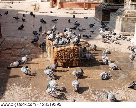 Dove Bird Wait Nepali People Feeding Food With Pigeon Birds Drinks Water And Playing Bath Water In C