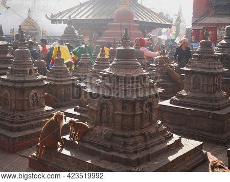 Monkey Walking Playing Sitting Relax In Swayambhunath Or Swayambu Or Swoyambhu Or Monkey Temple For