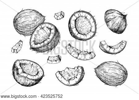Hand Drawn Coconut. Half And Pieces Of Coco. Tropical Palm Tree Harvest. Whole Or Chopped Nuts Set.