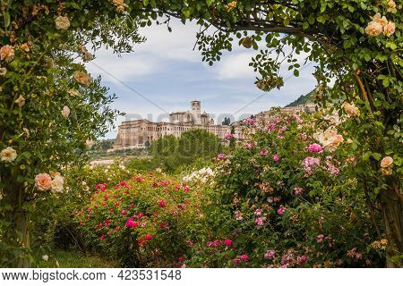 Romantic View Of Assisi Called The City Of The Peace Framed By Roses During Spring Day In Umbria, It