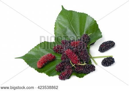 Isolated Mulberry. Top View Organic Mulberry Fruits With Green Leaves On White Background. With Clip
