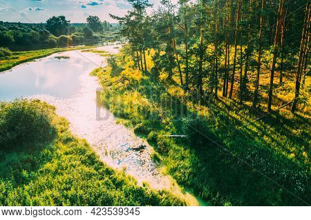 Belarus. Elevated View Of Green Small Bog Marsh Swamp Wetland And Green Pine Forest Landscape In Sun