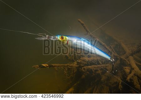 A Blue Elongated Wobbler Swims Underwater Past An Old Dark Snag While Fishing. The Tight Leash Pulls