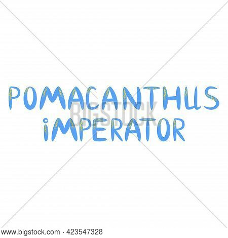 Emperor Angelfish Pomacanthus Imperator On White, Sea Animal Wildlife Character. Nature Underwater,
