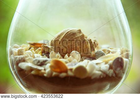 Seashell In A Glass With Seashells On The Seashore.