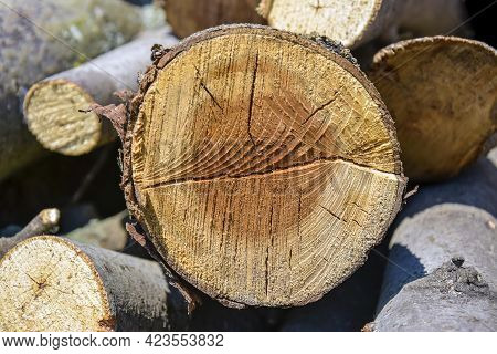 Sawn Mature Tree Section With Cracks And Rings That Tell It's Age. Saw Marks. Wooden Surface, Textur