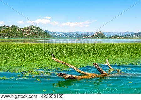 Rijeka Crnojevica. Amazing View Of Rijeka Crnojevica. Skadar Lake National Park, Montenegro