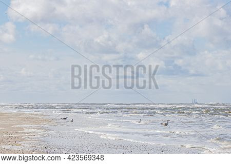 Seagulls Walking On Sea Water On A Beach With Calm Sea, Day With A Blue Sky With Abundant White Clou