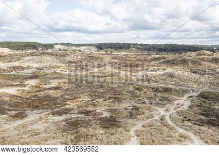 Dune Landscape With Hiking Trails, White Sand, Grass, Dry Heather And Trees With Green Foliage In Th