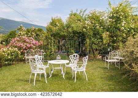 Beautiful View Of Romanti English Rose Garden