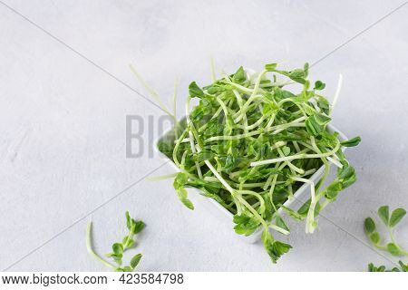 Bowl With Peas Microgreens On Grey Background. Sprouted Seeds. Healthy Eating Sprouts.