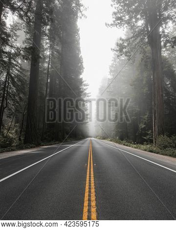 Scenic route in the Redwood National Forest in California, USA