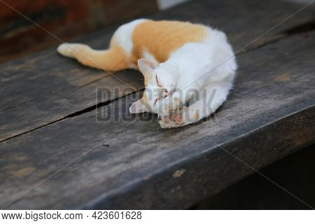 Yellow Cat Relaxing On A Wooden Table, Keeping Cats In The House Can Help Relieve Stress.