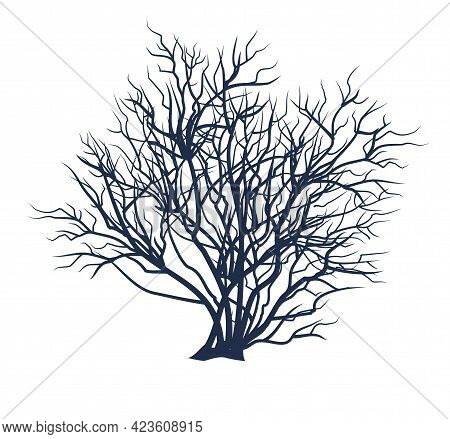 Bare Tree Without Leaves. Dark Silhouette. Thickets. Dense Crown With Many Small Branches. Or Close-