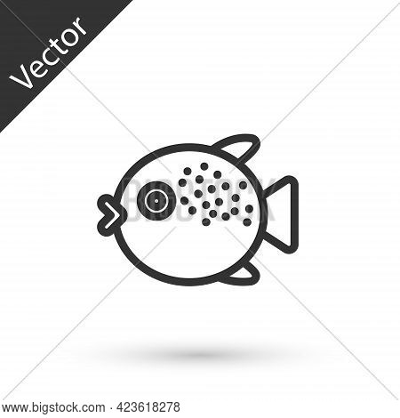 Grey Line Puffer Fish Icon Isolated On White Background. Fugu Fish Japanese Puffer Fish. Vector.