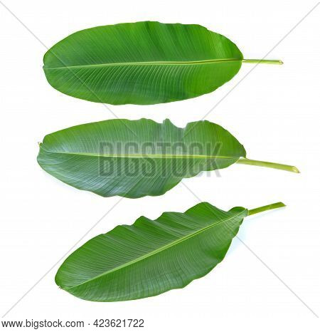 A Banana Leaves On A White Background