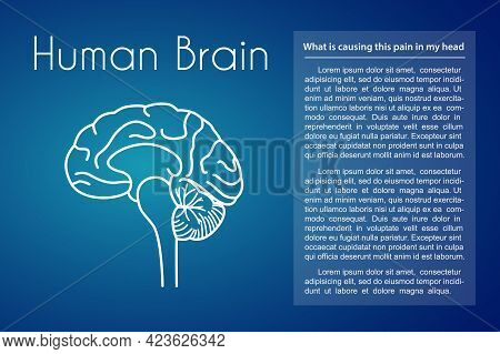 Human Brain Linear Medical Icon On Blue Background. Vector Illustration Of Brain Anatomy. Cross Sect
