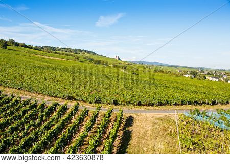 Famous Rheingau Vineyards Region In Late Summer In Germany, Green Hills On Sunny Day. Famous Vineyar