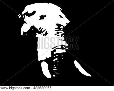 Black Silhouette Of Elephant.vector Illustration , Wildlife, Zoo, Zoology.