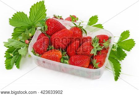 Freshly Harvested  Ripe Garden Strawberries In Packing In The Form Of Translucent Food Container Amo
