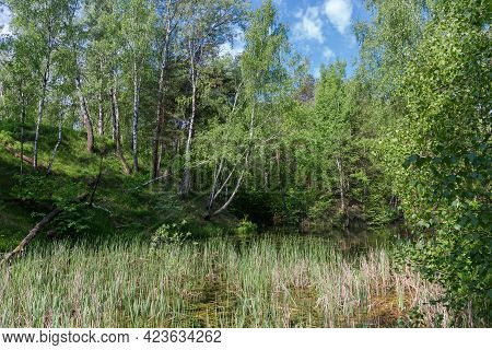 Small Shallow Lake Overgrown With Reeds Among The Surrounding Forested Hills In Early Summer