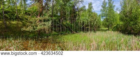 Small Shallow Lake Overgrown With Reeds, Where Turtles Live, Among The Surrounding Forested Hills In
