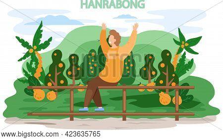 Happy Male Traveler In Jeju Island Near Mandarine Orange Garden Hanrabong. Traveling To Asia. Planta