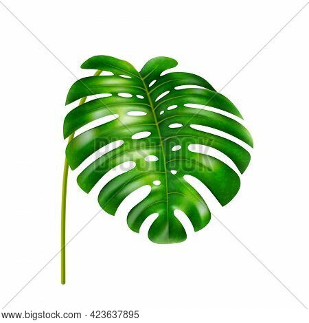 Monstera Leaf With Holes, Stable Of Tropical Plant, Vegetation Of Jungles Or Exotic Forests, Rainfor