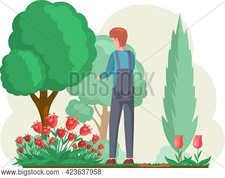 Guy Gardening Plants On Backyard Flowers On Beautiful Flower Bed, Enjoying Tulips And Roses In Sprin