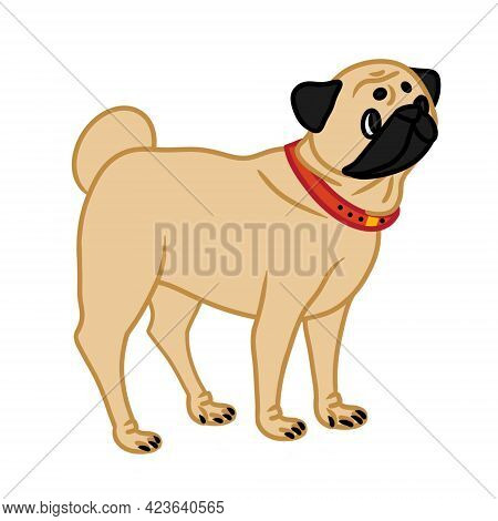 Vector Illustration Of Pug Isolated On White Background. Design Element For Printing On T-shirts In